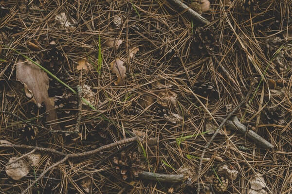 twigs and grass